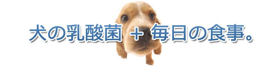 犬の乳酸菌+毎日の食事